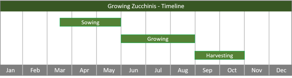 how to grow zucchinis from seed to harvest timeline