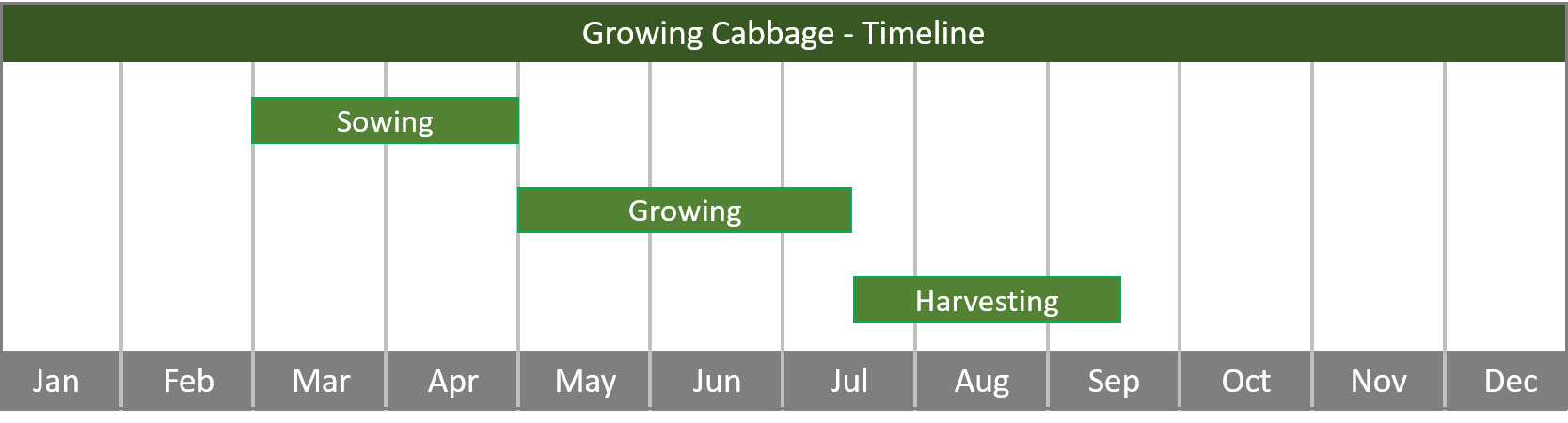 how to grow cabbage from seed to harvest at home timeline