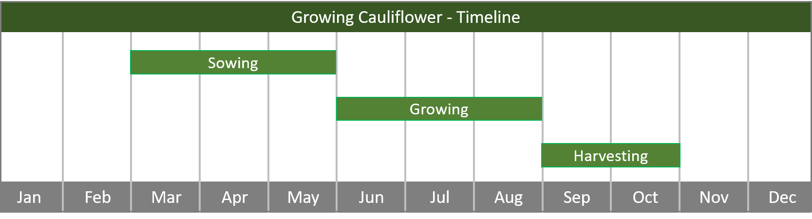 how to grow cauliflower from seed to harvest timeline