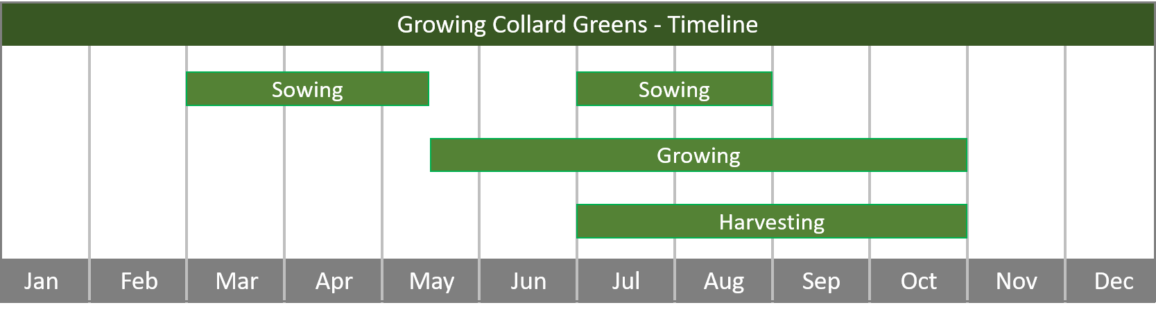 how to grow collard greens from seed to harvest at home timeline