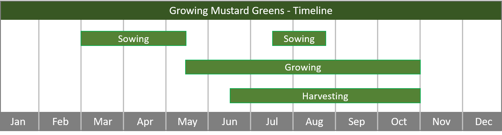how to grow mustard greens from seed to harvest at home timeline