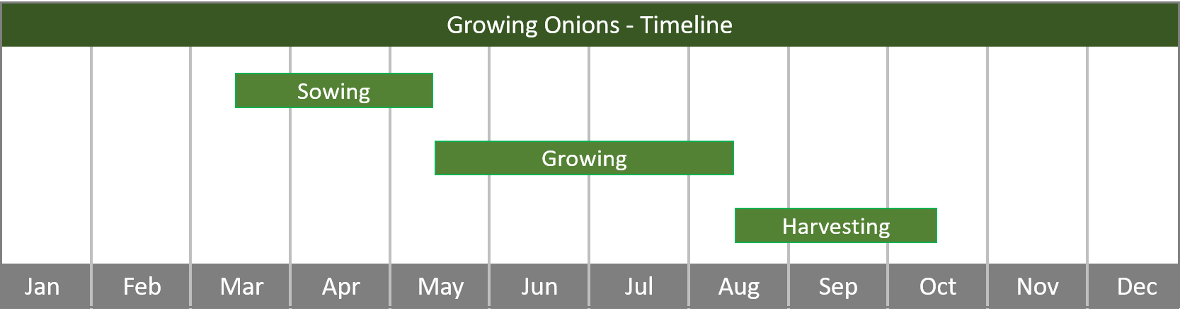 how to grow onions from seed to harvest timeline