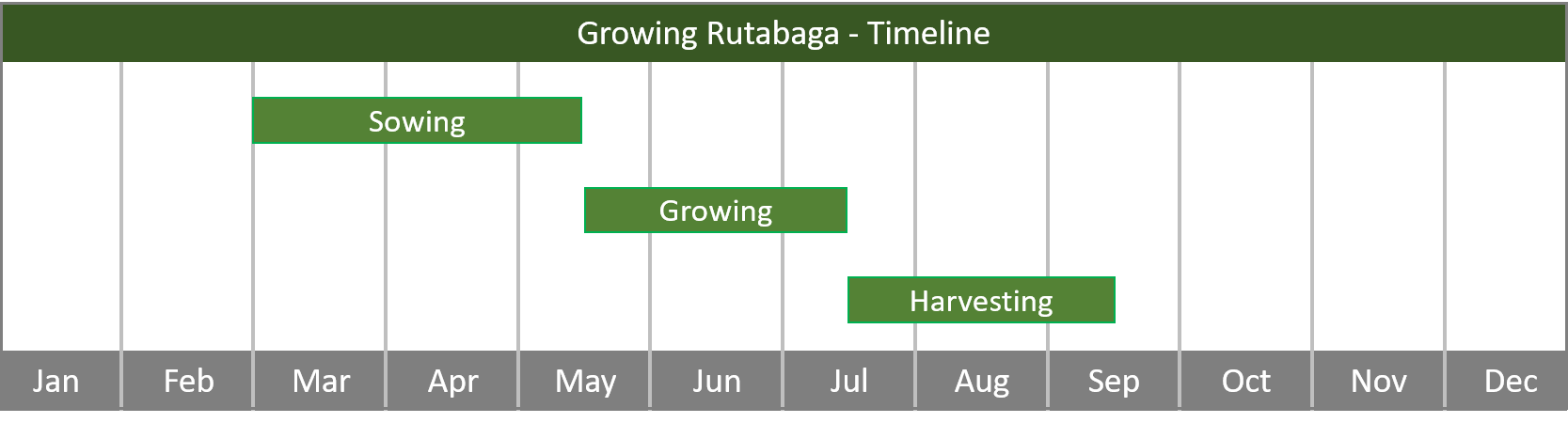 how to grow rutabaga from seed to harvest at home timeline