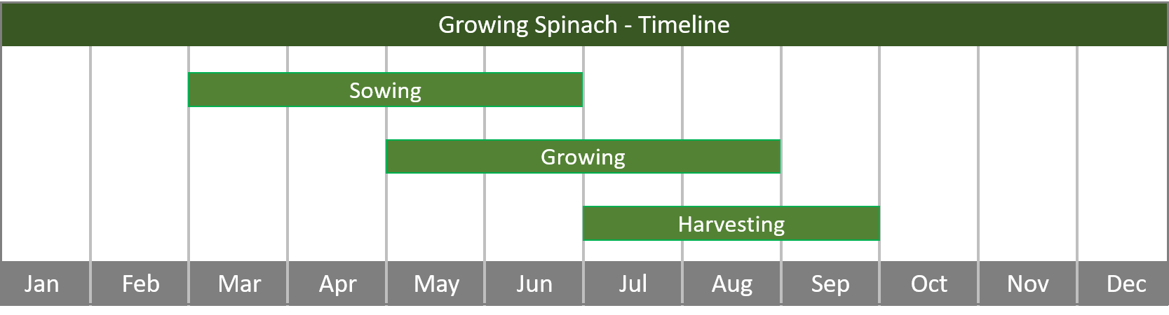 how to grow spinach from seed to harvest at home timeline